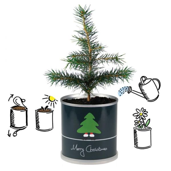 Tannenbaum aus der Dose, MacFlowers Merry Christmas